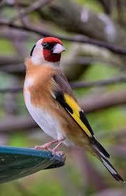أجمل الطيور في العالم Facebook