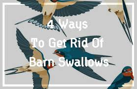 swallow plete guide top 3