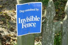 Before Installing An Invisible Dog Fence Consider These Reasons Not To Get Electric Dog Fences The First Time Dog Owner Guide