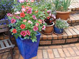 container and small space gardening diy