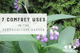 comfrey uses in the permaculture garden
