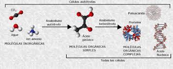 Biomoléculas: Clasificación y Funciones Principales - Lifeder