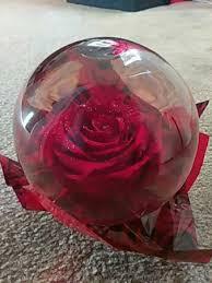preserved rose globe red 17 95 in