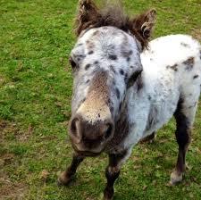 Redwings Horse Sanctuary - Ada Cole, Broadlands, Epping Road, B181, Roydon,  Nazeing EN9 2DH, UK