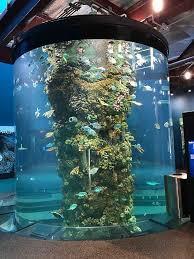 aquarium at moody gardens