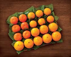 florida citrus florida oranges navel