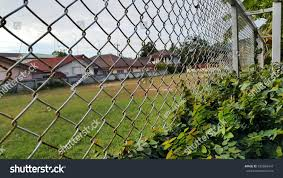 Wire Mesh Fence Green Climbing Plant Stock Photo Edit Now 539056447