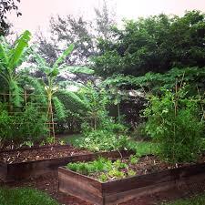 edible gardening in south florida spring
