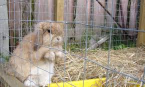 How To Keep A Free Range Outdoor Rabbit Pethelpful By Fellow Animal Lovers And Experts
