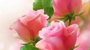 صور خلفيات ورد اروع صور خلفيات الورد كيف