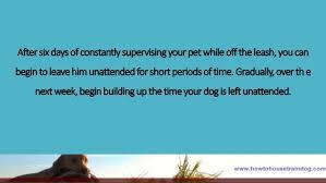 Training Your Dog Using A Pet Safe Electric Dog Fence Week 3