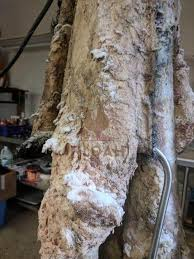 how to tan hides using traditional