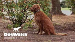 My Dog Stops At Nothing Dogwatch Hidden Fences Youtube
