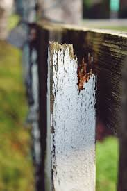 Free Images Tree Water Nature Post Wood Leaf Trunk Old Green Color Autumn Broken Season Weathered Close Up Limit Batten Garden Fence Construction Material Wooden Slat Woody Plant 2667x4000