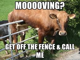 Mooooving Get Off The Fence Call Me Cow Stuck On Fence Ab Meme Generator