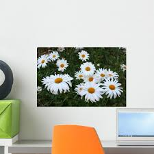 Field Daisies Wall Decal Wallmonkeys Com