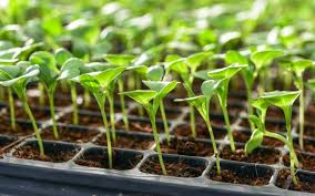 planting calendar when to plant