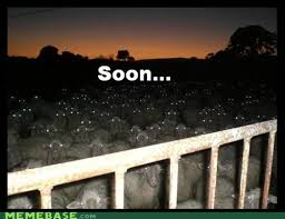 The Sheep Are Prepared For The Alpacalypse Memebase Funny Memes