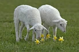 حيوانات بحرف خ تعرف على الحيوانات التى تبدا بحرف الخاء صور حزينه