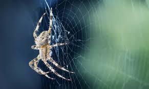 Sennik pająk – co oznacza sen o pająkach? Wyjaśniamy
