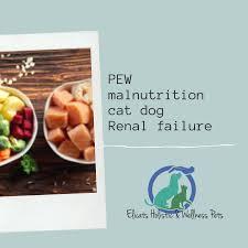 pew malnutrition cat dog renal failure ckd