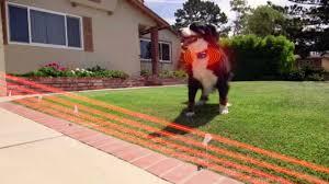 Best Wireless Dog Fence Wonder Pets