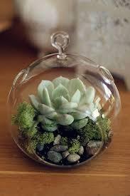 succulents diy succulent terrarium