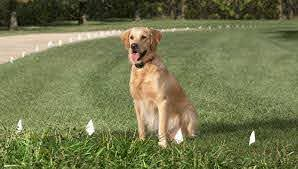Hidden Pet Fence For Your Animal S Invisible Dog Fence