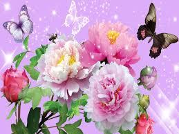 desktop wallpaper erflies flowers