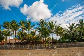 The Fence And Houses Palm Trees On The Beach Pandan Panay Stock Photo Picture And Royalty Free Image Image 81643325
