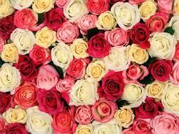 أجمل صور ورود حب ورومانسية لطيفة جدا Fragrant Roses Rose