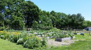 start a raised bed garden