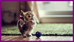 cute kittens and puppies wallpaper