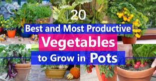 best vegetables to grow in pots most