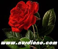 nasib tragis bunga mawar meaningful life