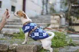 hypoallergenic dog treats the 12 best