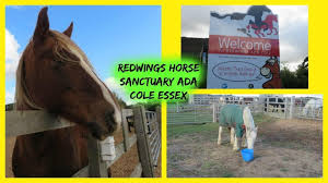 Redwings Horse Sanctuary - Ada Cole - Amazing Days Out - United Kingdom