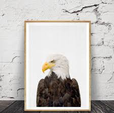 Bald Eagle Print American Eagle Wall Art Poster Framed Art Hawke Boys Room Decor Bird Animal Photography Minimalist Posters Paintings Framed Wall Art Wall Papers Stickers Decals More