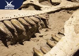 fiberglass resin dinosaur fossil