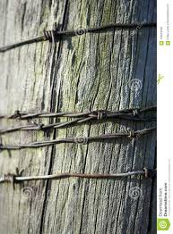 Strands Of Rusty Barb Wire On A Fence Post Stock Photo Image Of Captivity Protection 105024448