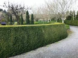 Create A Privacy Hedge With Shrubs Garden Goods Direct