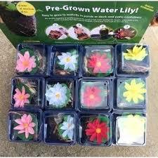 plants fertilizer halongbay cruises