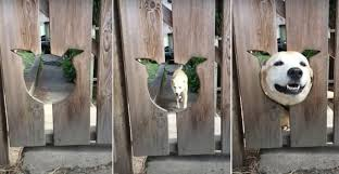 Awww Dog Comes When Called To Stick Head Out Of Head Shaped Hole In Fence Borninspace