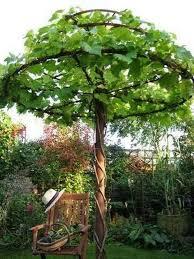 beautiful g vine ideas to invite