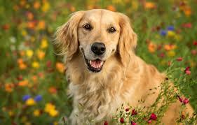 face flowers portrait dog bokeh