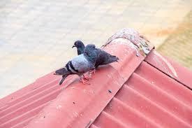 5 diy ways to keep birds away natural