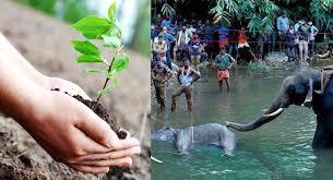पेड़-पौधों के साथ मर्यादित आचरण ...
