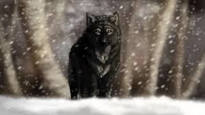 black wolf wallpapers the best 64