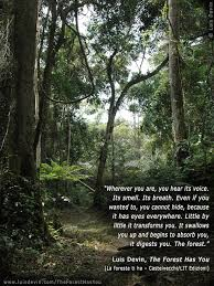 tropical rainforest photo gallery of the book the forest