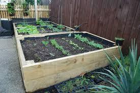 raised beds pod easy edible gardening